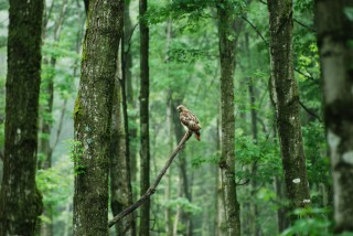 Often, you will see red-tailed hawks on the edge of the woods.  They blend in when their back is turned to usl.