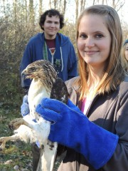 The opportunity to release a beautifully conditioned hawk or owl that is ready to return to its wild home, is reward enough for those who volunteer to set up programs and organize groups of volunteers.