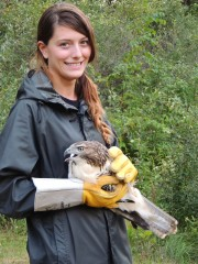 Mallory, one of our volunteers from Saginaw Valley State University, prepares to release a red-tailed hawk.