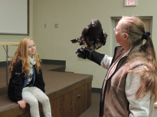 Midnight is a dark phase Rough-legged Hawk.  They nest in the arctic and move south during winter for easier hunting.  She is shown here at a special program at Central Michigan University.