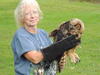 Paula, who often transports birds to the Wildlife Recovery Association sanctuary gets a chance to release a fledgling great horned owl back on territory.